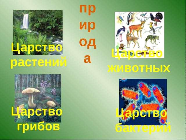 Царство растений Царство животных Царство грибов Царство бактерий природа