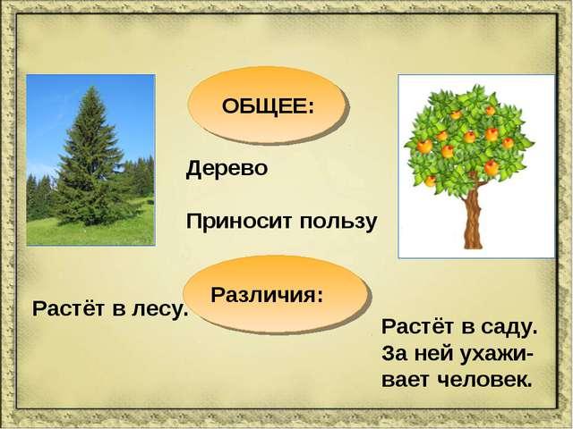 ОБЩЕЕ: Дерево Приносит пользу Различия: Растёт в саду. За ней ухажи-вает чело...