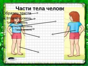 Части тела человека