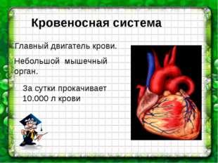 Главный двигатель крови. Небольшой мышечный орган. За сутки прокачивает 10.0