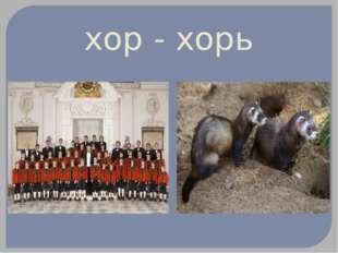 хор - хорь