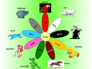 colour black brown grey yellow red green pink white blue elephant parrot cat