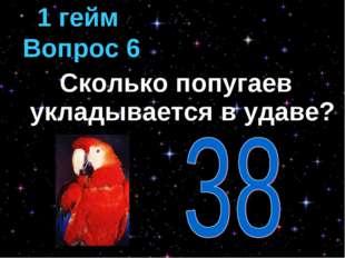 Сколько попугаев укладывается в удаве? 1 гейм Вопрос 6