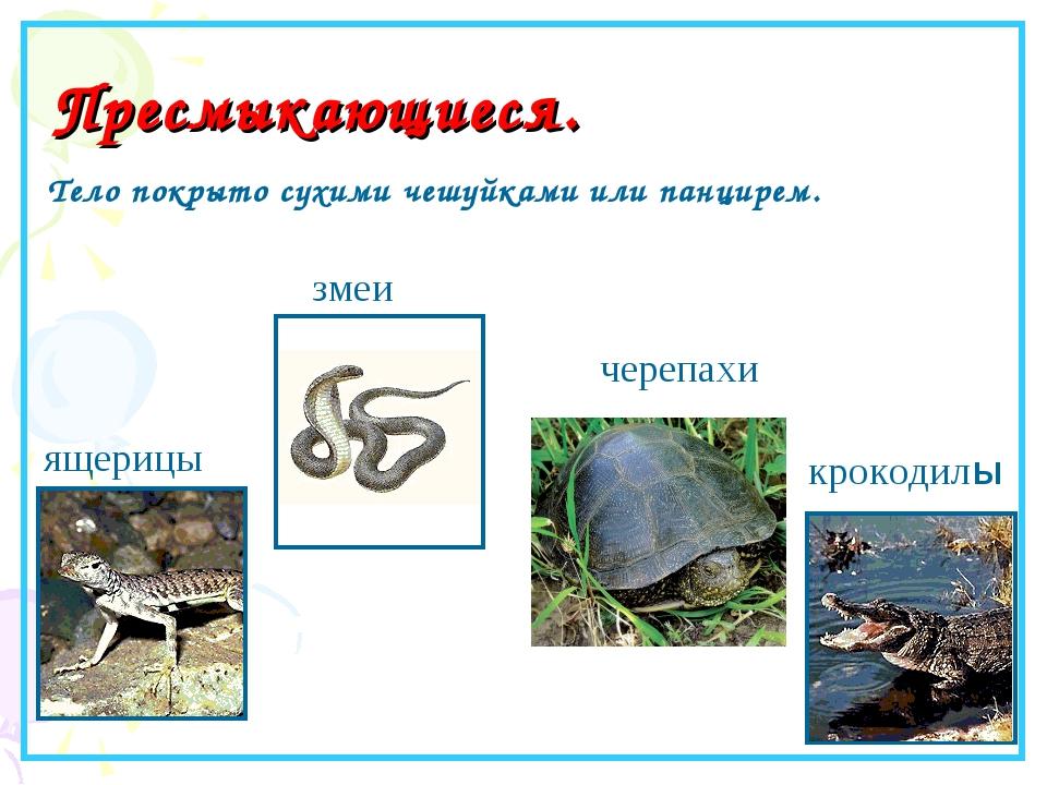 Пресмыкающиеся. ящерицы змеи крокодилы Тело покрыто сухими чешуйками или пан...