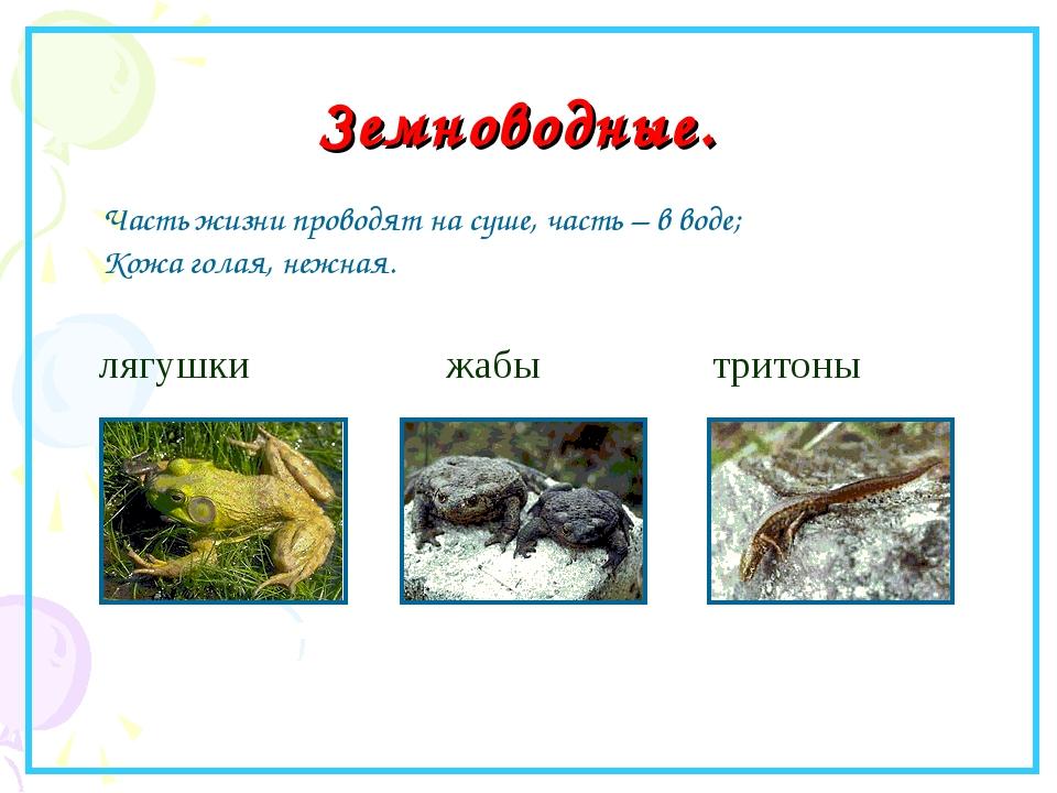 Земноводные. лягушки жабы тритоны Часть жизни проводят на суше, часть – в вод...