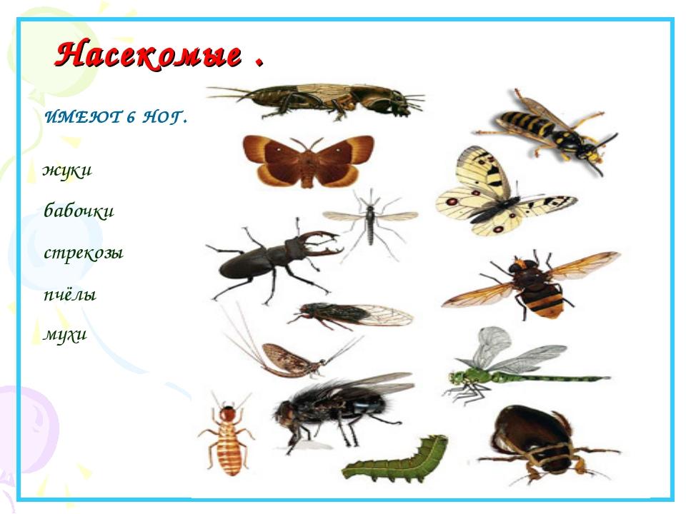 Насекомые . ИМЕЮТ 6 НОГ. жуки бабочки стрекозы пчёлы мухи