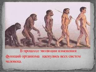 В процессе эволюции изменения функций организма каснулись всех систем челове