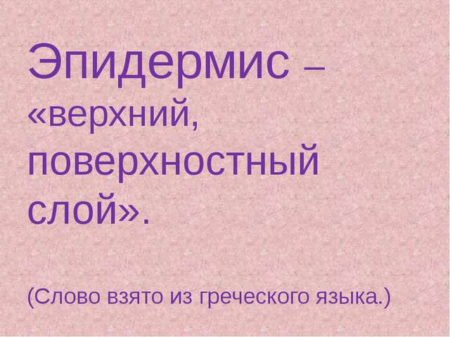 Эпидермис – «верхний, поверхностный слой». (Слово взято из греческого языка.)