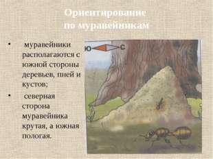 Ориентирование по муравейникам муравейники располагаются с южной стороны дере