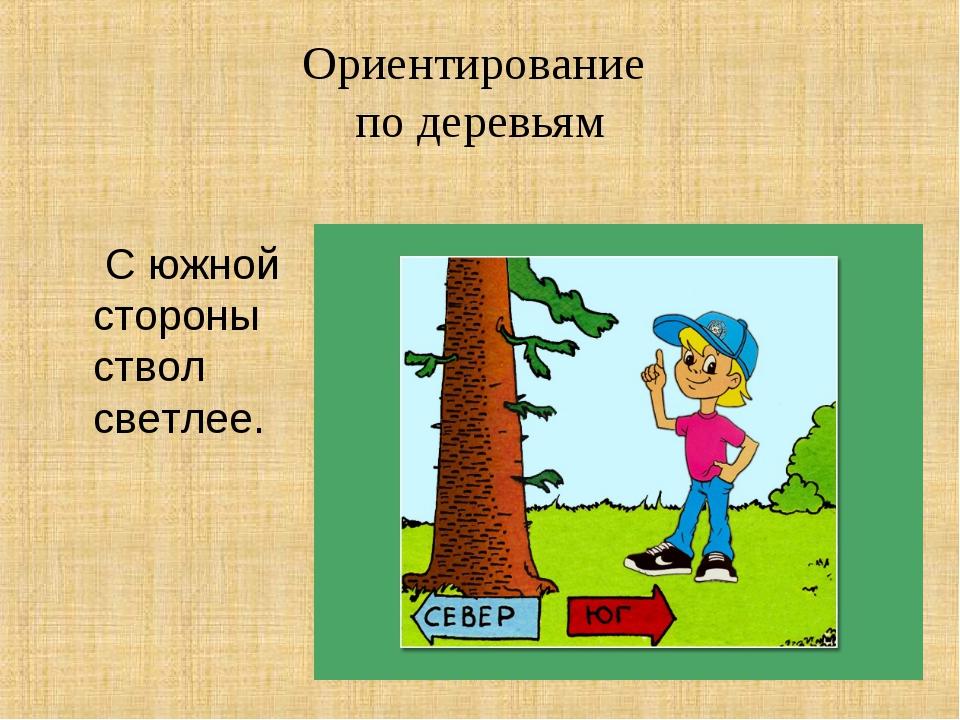 Ориентирование по деревьям С южной стороны ствол светлее.