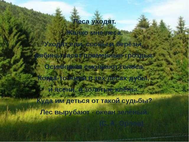 Леса уходят. Жалко мне леса. Уходят ели, сосны и берёзы, рябины гасят пламен...