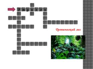 д н у ж г л и Тропический лес