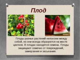 Плоды разных растений непохожи между собой, но они всегда образуются на мест