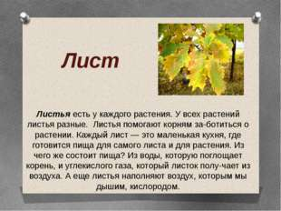 Лист Листья есть у каждого растения. У всех растений листья разные. Листья по