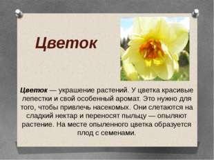 Цветок Цветок — украшение растений. У цветка красивые лепестки и свой особенн