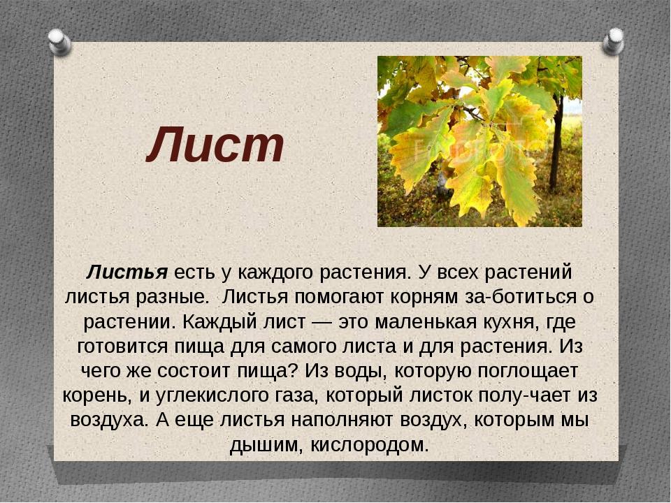 Лист Листья есть у каждого растения. У всех растений листья разные. Листья по...