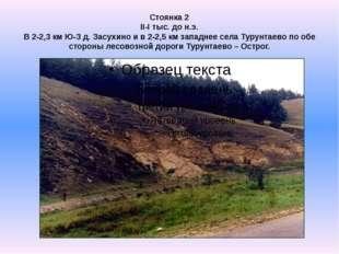 Стоянка 2 II-I тыс. до н.э. В 2-2,3 км Ю-З д. Засухино и в 2-2,5 км западнее