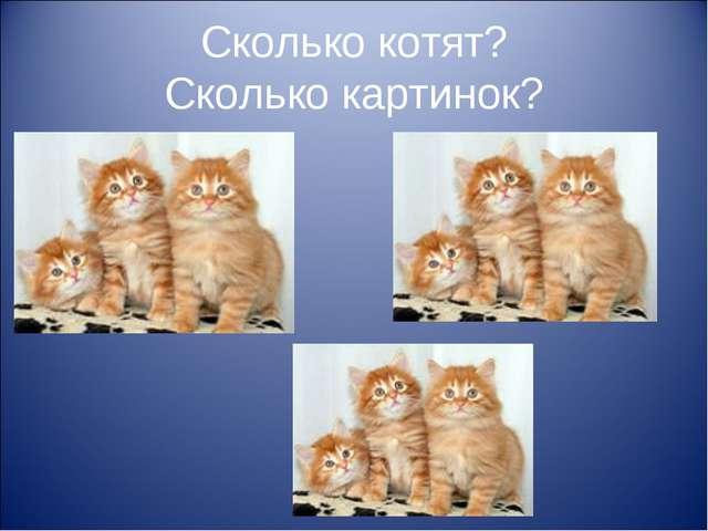 Сколько котят? Сколько картинок?
