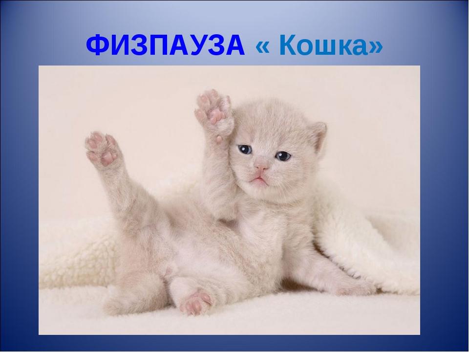 ФИЗПАУЗА « Кошка»