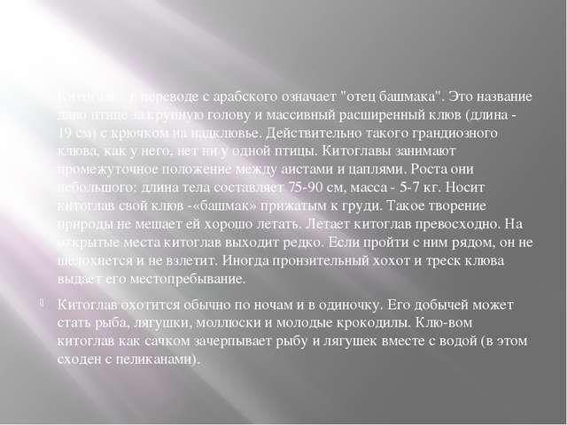 """Китоглав - в переводе с арабского означает """"отец башмака"""". Это название дано..."""