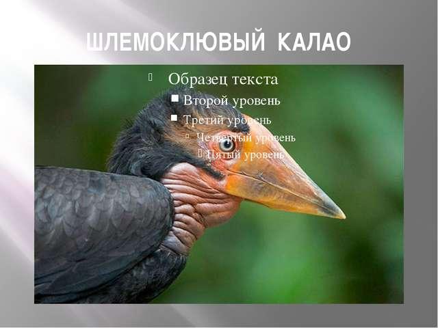 ШЛЕМОКЛЮВЫЙ КАЛАО