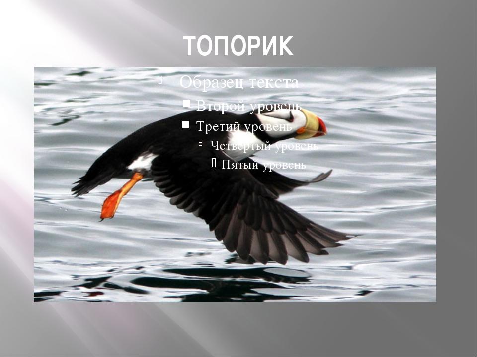 ТОПОРИК