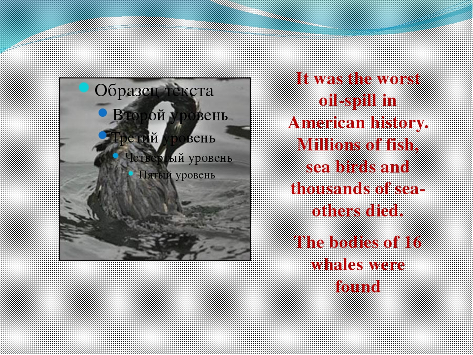 It was the worst oil-spill in American history. Millions of fish, sea birds...