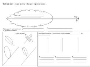 Рабочий лист к уроку по теме «Внешнее строение листа». Какую работу выполняет