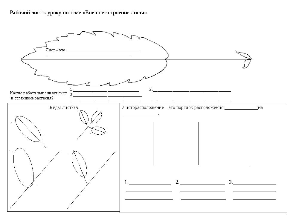 Рабочий лист к уроку по теме «Внешнее строение листа». Какую работу выполняет...