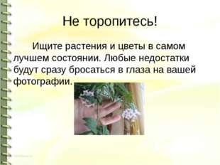 Не торопитесь! Ищите растения и цветы в самом лучшем состоянии. Любые недоста