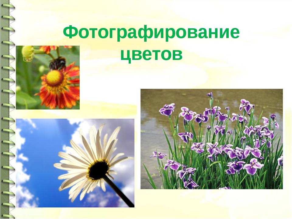 Фотографирование цветов
