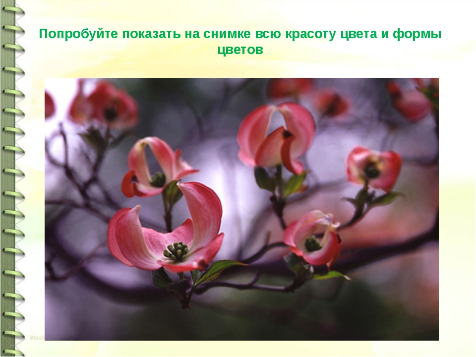 Попробуйте показать на снимке всю красоту цвета и формы цветов