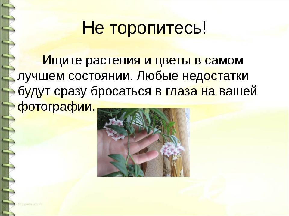 Не торопитесь! Ищите растения и цветы в самом лучшем состоянии. Любые недоста...