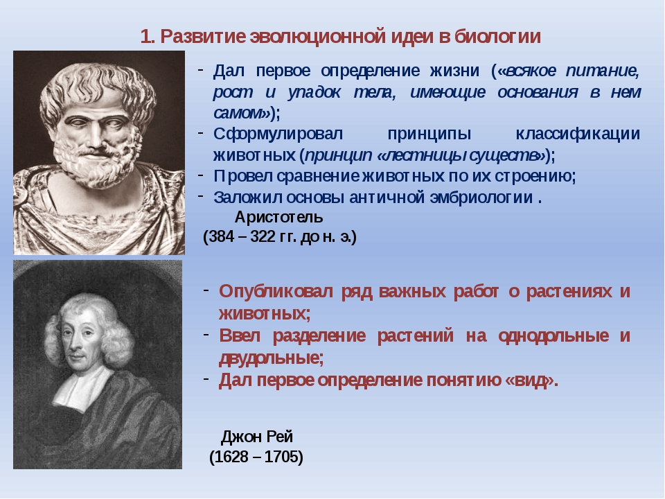 1. Развитие эволюционной идеи в биологии Аристотель (384 – 322 гг. до н. э.)...