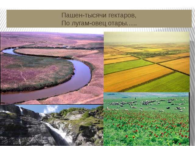 Пашен-тысячи гектаров, По лугам-овец отары…..