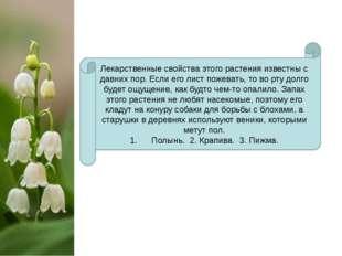 Лекарственные свойства этого растения известны с давних пор. Если его лист п