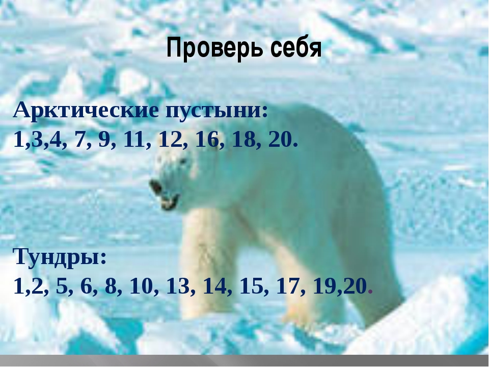 Проверь себя Арктические пустыни: 1,3,4, 7, 9, 11, 12, 16, 18, 20. Тундры: 1,...