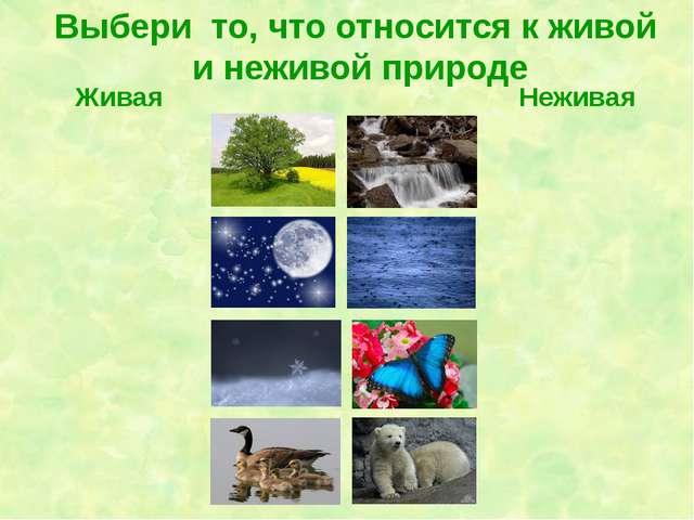 Выбери то, что относится к живой и неживой природе Живая Неживая