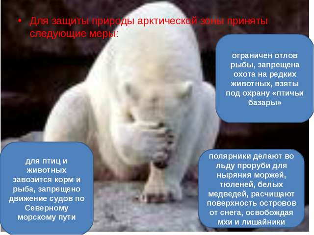 Для защиты природы арктической зоны приняты следующие меры: ограничен отлов...
