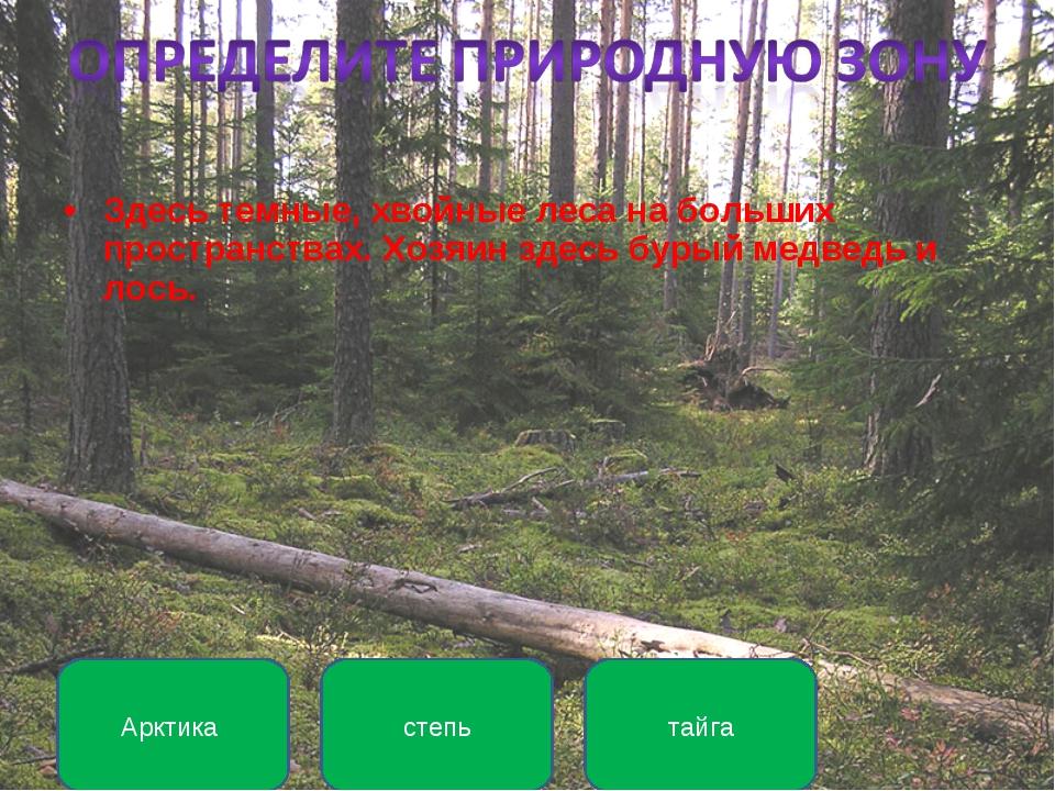 Здесь темные, хвойные леса на больших пространствах. Хозяин здесь бурый медве...