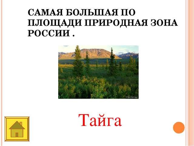 САМАЯ БОЛЬШАЯ ПО ПЛОЩАДИ ПРИРОДНАЯ ЗОНА РОССИИ . Тайга