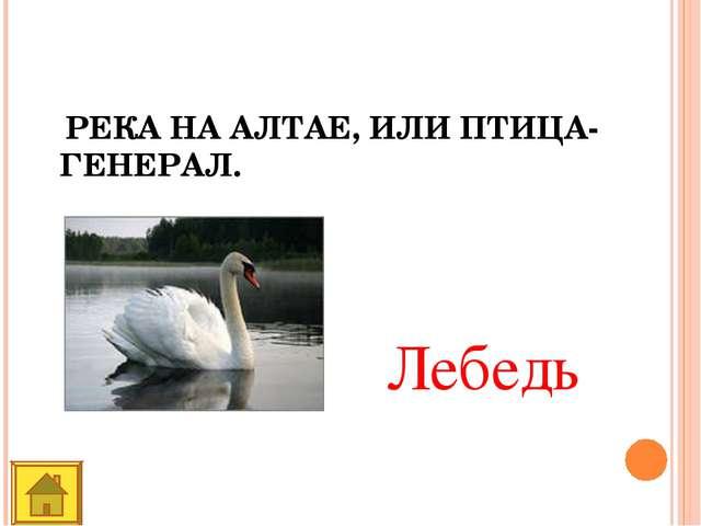 РЕКА НА АЛТАЕ, ИЛИ ПТИЦА-ГЕНЕРАЛ. Лебедь