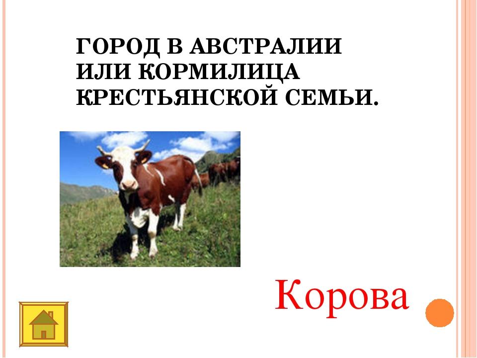 ГОРОД В АВСТРАЛИИ ИЛИ КОРМИЛИЦА КРЕСТЬЯНСКОЙ СЕМЬИ. Корова