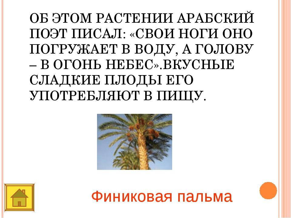ОБ ЭТОМ РАСТЕНИИ АРАБСКИЙ ПОЭТ ПИСАЛ: «СВОИ НОГИ ОНО ПОГРУЖАЕТ В ВОДУ, А ГОЛО...