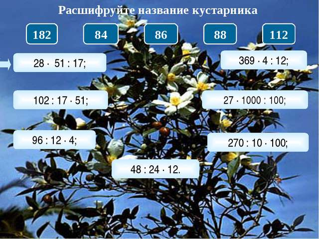 28 · 51 : 17; Расшифруйте название кустарника 102 : 17 · 51; 96 : 12 · 4; 48...