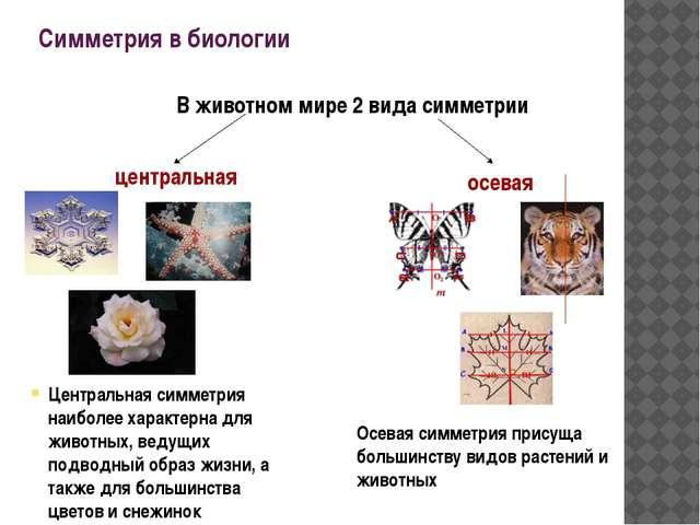 Симметрия в биологии В животном мире 2 вида симметрии центральная осевая Осев...