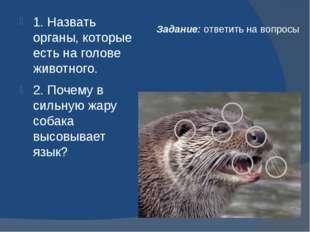 Задание: ответить на вопросы 1. Назвать органы, которые есть на голове животн