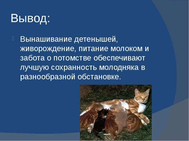 Вывод: Вынашивание детенышей, живорождение, питание молоком и забота о потомс...