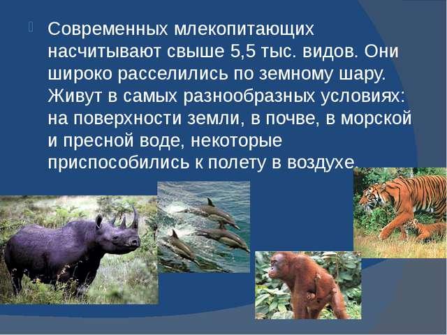 Современных млекопитающих насчитывают свыше 5,5 тыс. видов. Они широко рассе...