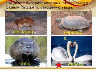 бобр песчанка лебедь черепаха ЗАДАНИЕ: выберите животных, относящихся к разн